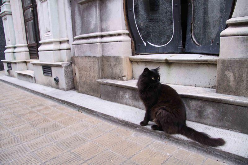 black cat at recoleta cemetry