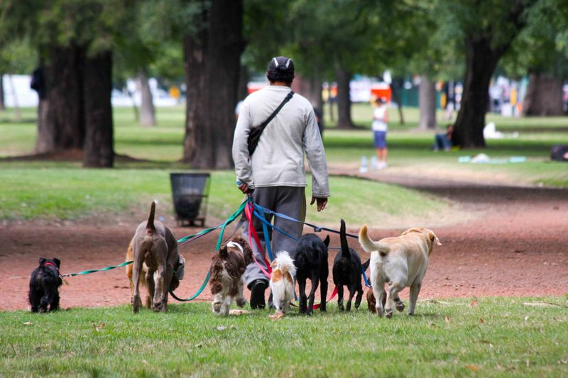 Dog Walker in Buenos Aires Japanese park