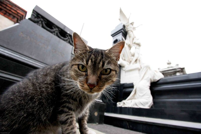 knowing cat at recoleta cemetery