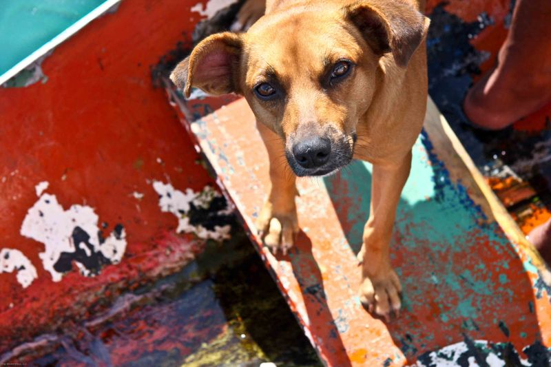 Ilha Grande - man's best friend on the canoe