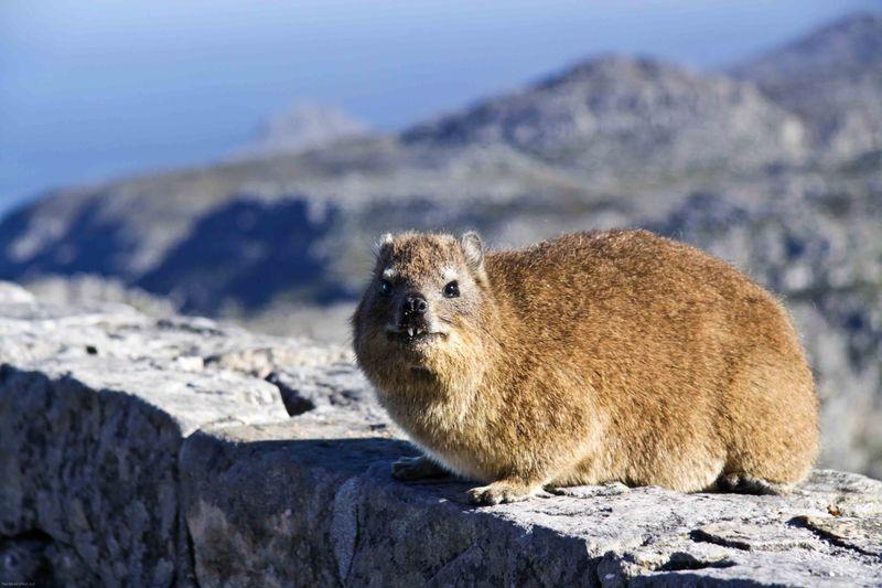 Table Mountain resident
