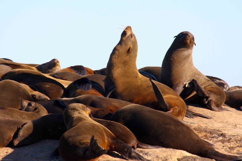 Seal Colony near Cape Town, South Africa