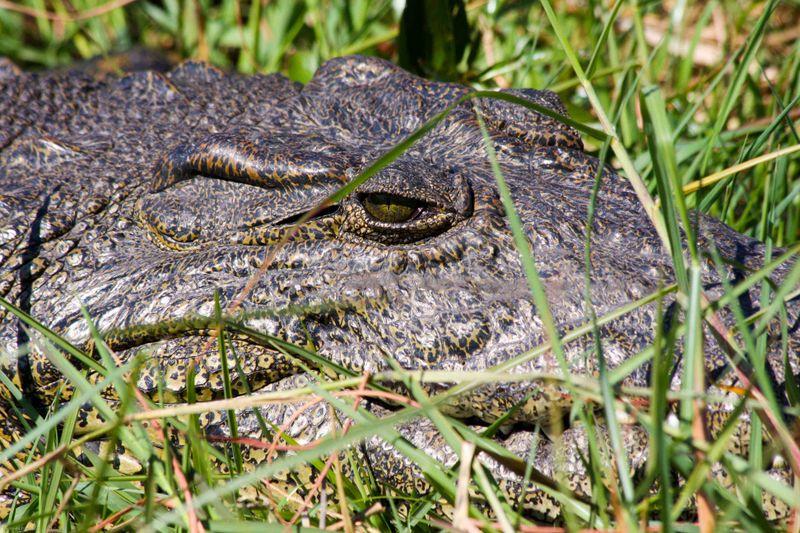 BIG croc. Chobe National Park, Botswana
