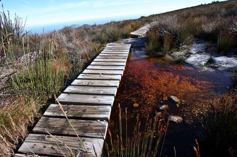 Hiking bridge and tea dyed water on Table Mountain