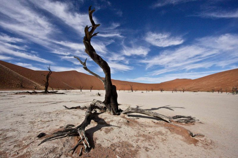 Ancient Tree. Deadvlei, Namibia