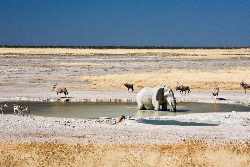 Etosha, Namibia Elephant at watering hole