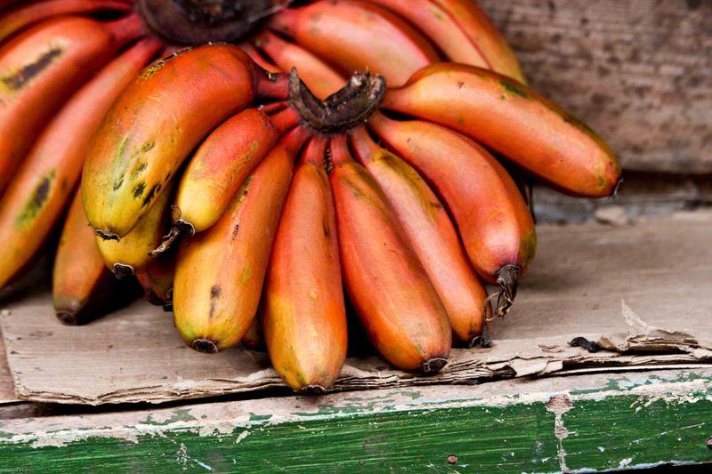 Arusha, Tanzania - Red Bananas