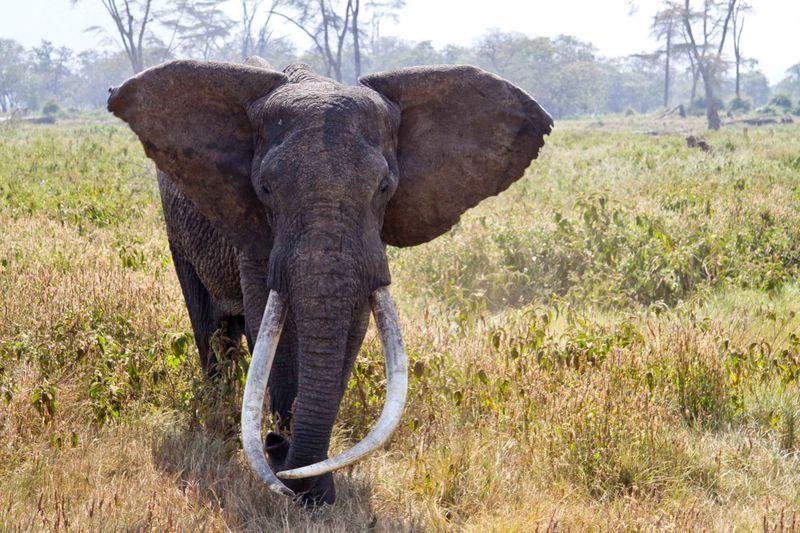 Ngorongoro Crater, Tanzania - Elephant