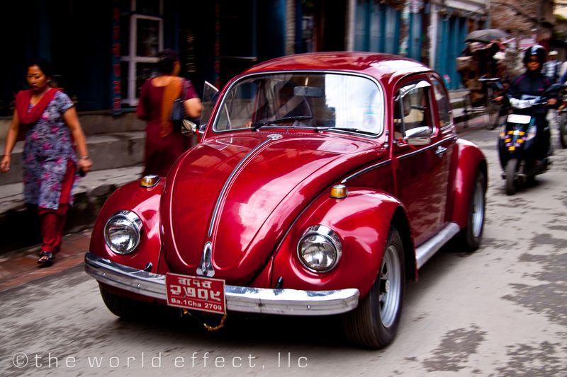 Bug. Kathmandu, Nepal