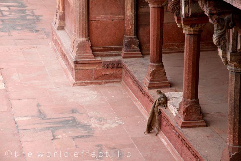 Agra Fort Monkey in center garden