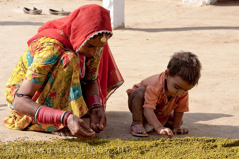 Woman and Boy drying lentils. Rajasthan, India