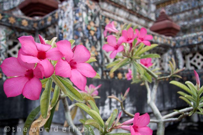 Bangkok, Thailand - Wat Arun 2