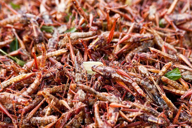 Bangkok, Thailand - Cricket Snack