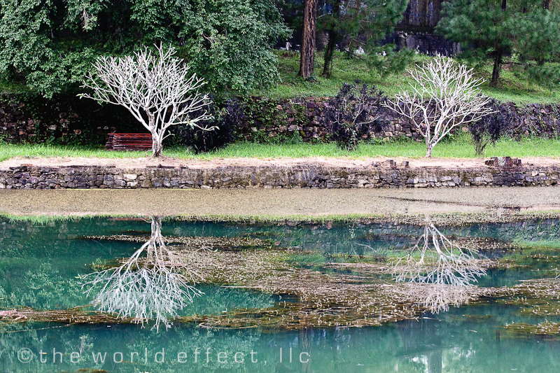 Hue, Vietnam - White trees at pond