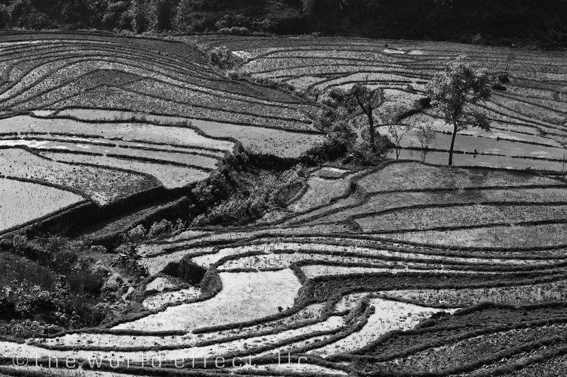 Sapa Vietnam - Rice Fields