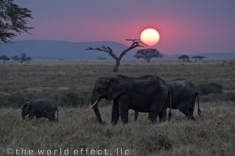 Sunset in Serengeti National Park, Tanzania