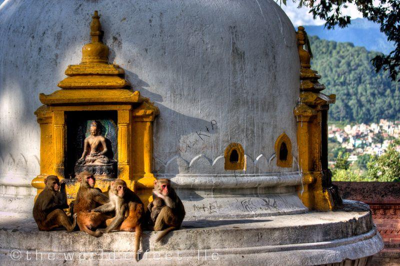 Monkeys of Swayambunath. Kathmandu, Nepal