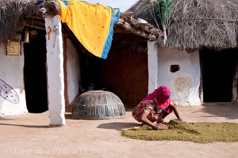 Woman drying Lentils