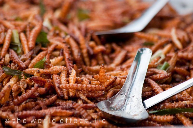 Bangkok, Thailand - Meal Worm Snack